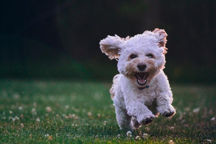 photo 1534361960057 19889db9621e - Colaboración para pelar a tu perro